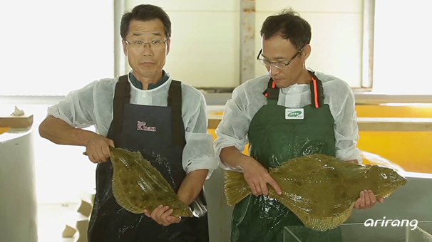 Keeping a Heart of the Sea : Korean Flatfish