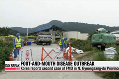 Korea reports second case of FMD in N. Gyeongsang-do Province