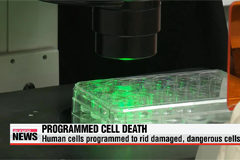 New substance kills cancer cells