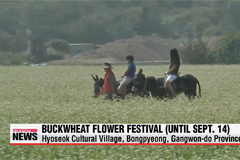 Buckwheat Flower Festival runs through Sunday