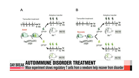 Researchers find key factors that could lead to autoimmunity treatment
