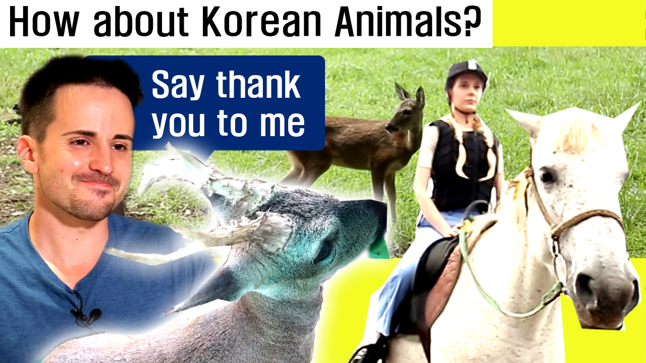[MYSTERY TRAVELERS] Lady and gentleman~Get along with Korean animals! [Jeju Island]
