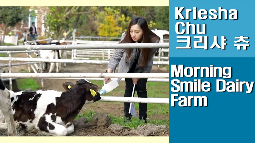 [Travel Agency] Jeju Morning Smile Dairy Farm, looking around the ranch and feeding the cattle